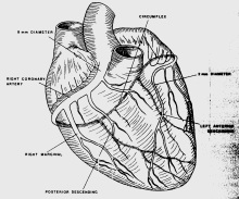 Maravich_heart
